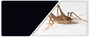 Best Pest Control In Manahawkin NJ